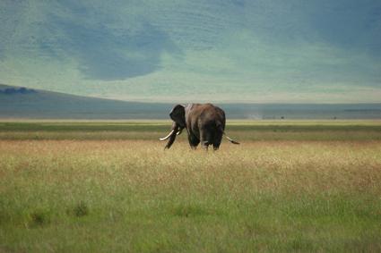 Elefante en Ngorongoro. Tanzania, abril de2006