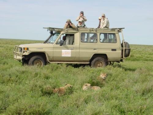 Guepardos en Ndutu. Tanzania, abril de 2006