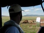 Leones en Masai Mara, Kenya. Marzo de 2002