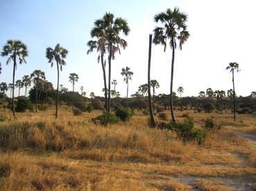 Tarangire. Tanzania, agosto de2004