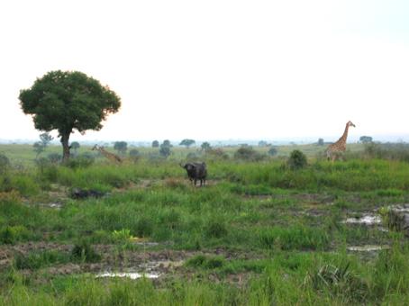 Muchinson Falls, Uganda. Agosto de2003