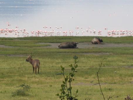 Lago Nakuru. Kenya. Septiembre de 2005