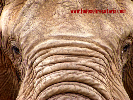 Elefante macho en Tarangire. Tanzania, septiembre de 2007