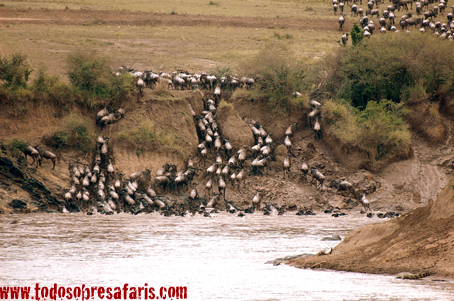 Cruce de ñues en el r�o Mara. Kenya, septiembre de 2007