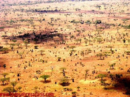 Vista aérea de Serengeti. Tanzania. Agosto de2007