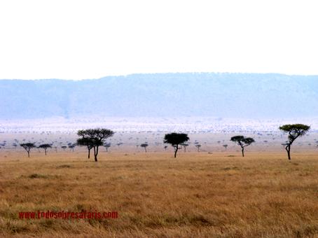 Mara West. Kenya, septiembre2007