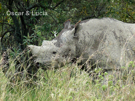 rhino_neg_nakuru
