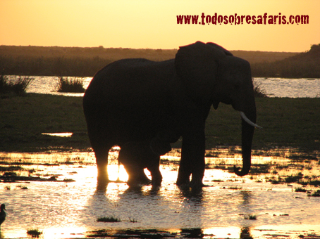 safari1-069