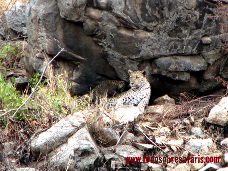 safari1-424